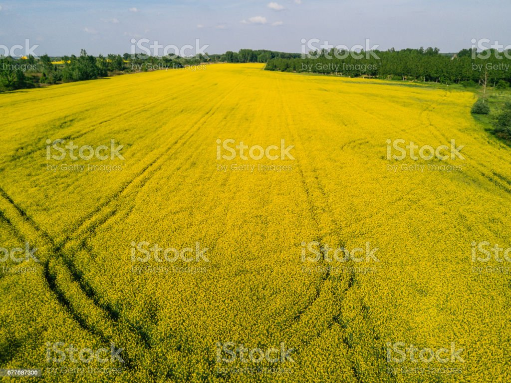 Drone image of yellow oilseed rape fields in Central Europe....