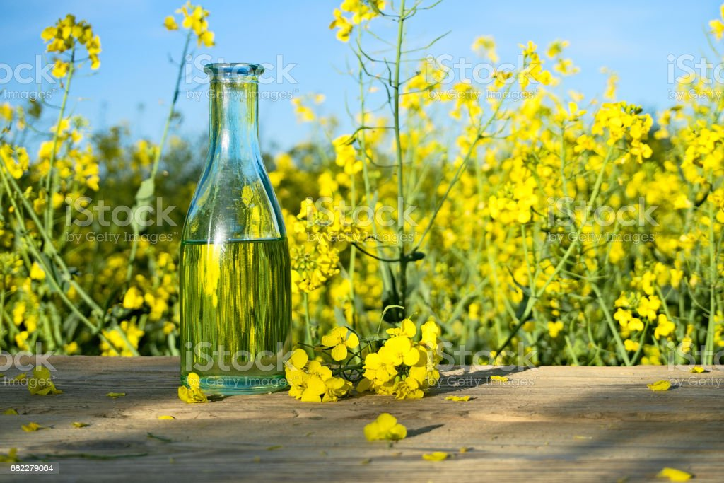 Oilseed rape in bottle with crop in background stock photo