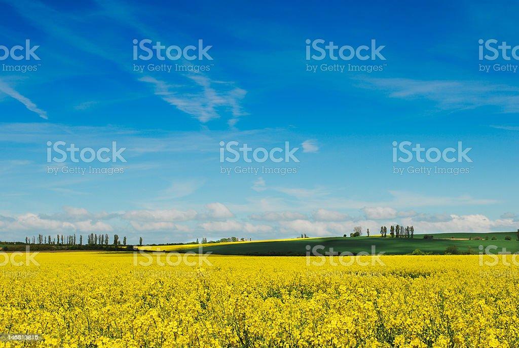 Oilseed rape landscape stock photo