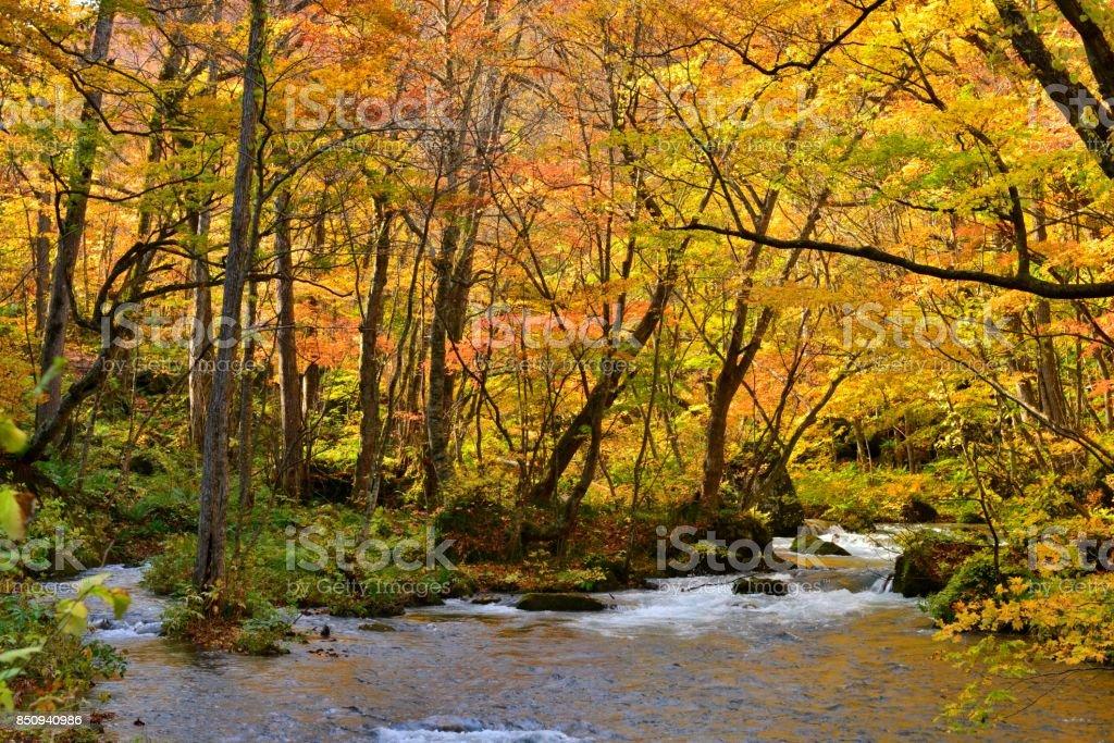 Oirase Mountain Stream in Autumn, Aomori, Japan stock photo