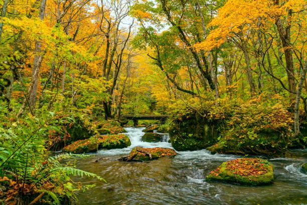 Oirase Flussfluss im bunten Laubwald der Herbstsaison – Foto