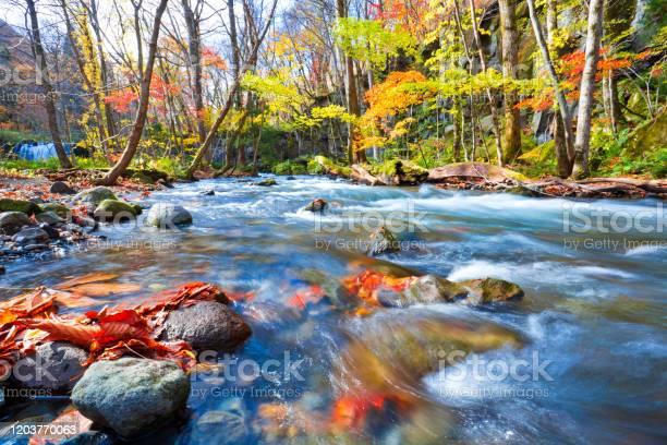 Photo of Oirase stream in Aomori prefecture, Tohoku, Japan.