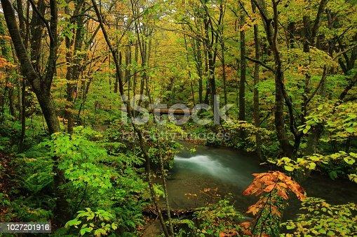 Towada City Aomori Prefecture Autumn Stream