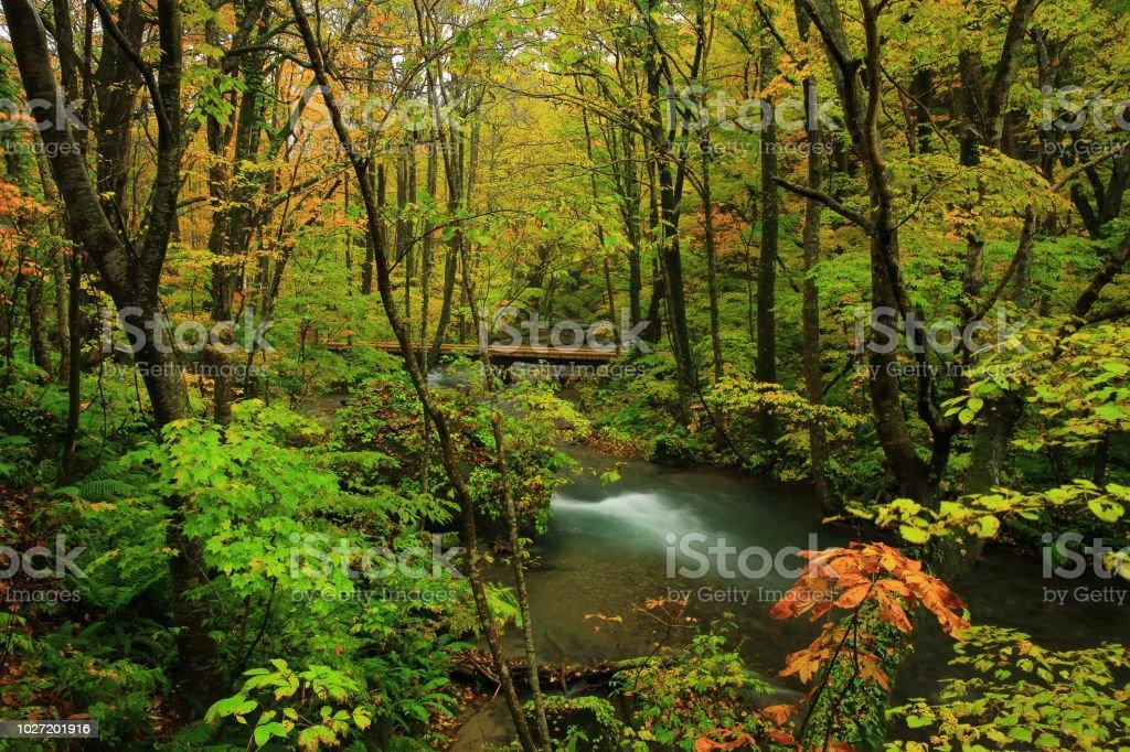 Oirase secuencia de hojas de otoño - foto de stock