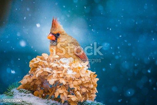 À l'extérieur pendant que la neige tombe. Oiseaux à la mangeoire.