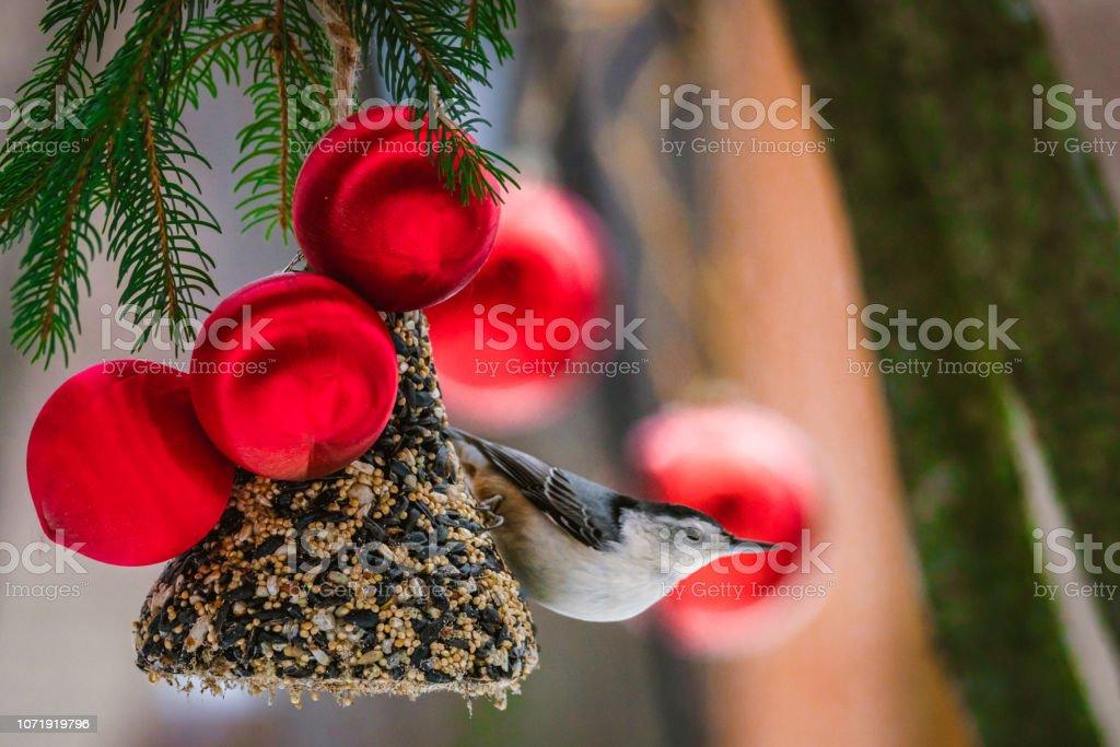 Oiseau de noël, Sittelle - Photo