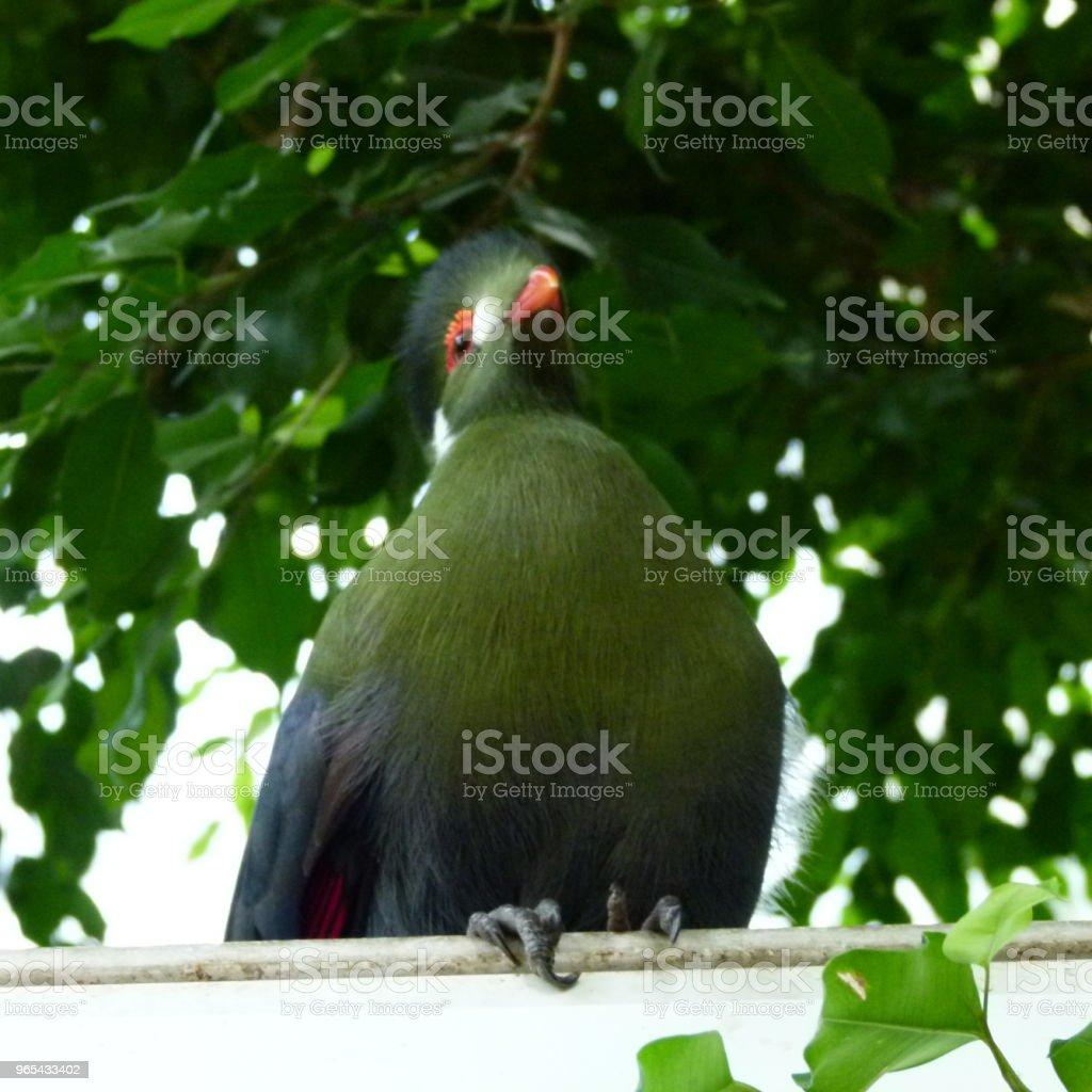 Oiseau des îles royalty-free stock photo