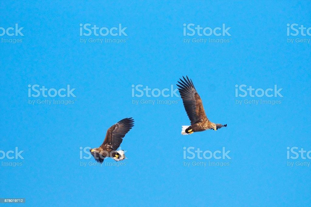 Ojirowa, flying over the wisdom floor stock photo