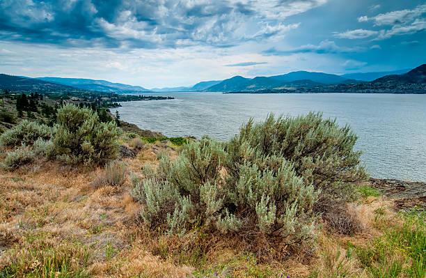 Okanagan Lake Near Naramata View With Brush stock photo