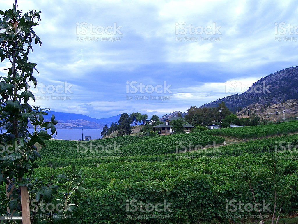 Okanagan Valley, British Columbia royalty-free stock photo