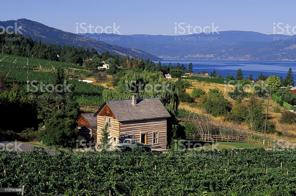 okanagan valley vineyard log cabin stock photo