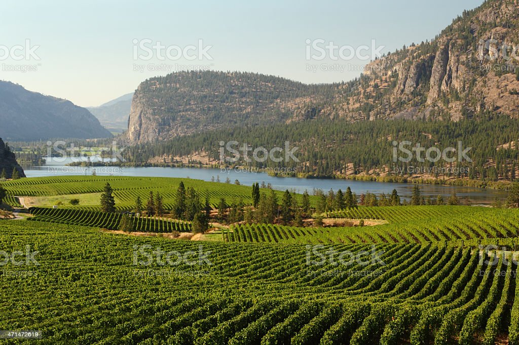 Okanagan Valley Vineyard Scenic, British Columbia stock photo