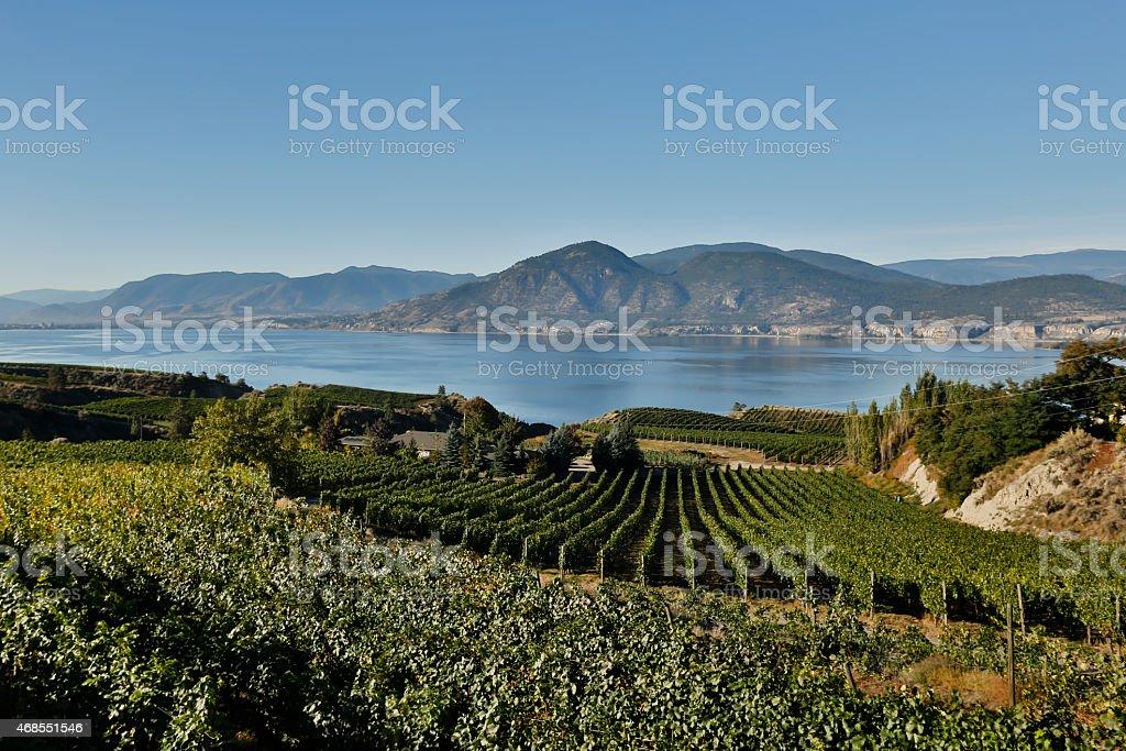 okanagan valley vineyards winery scenic naramata stock photo