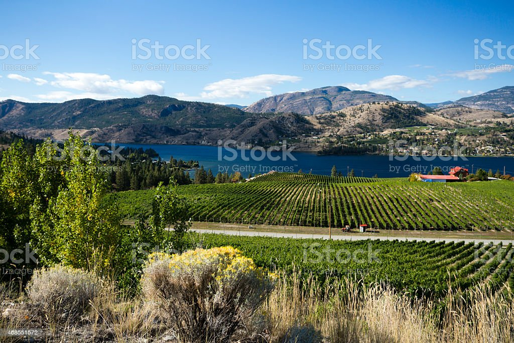 okanagan valley vineyards winery scenic penticton stock photo