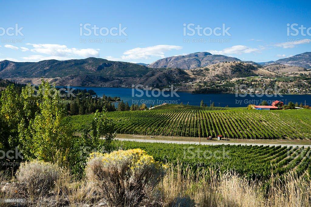 okanagan valley vineyards winery scenic penticton stock photo