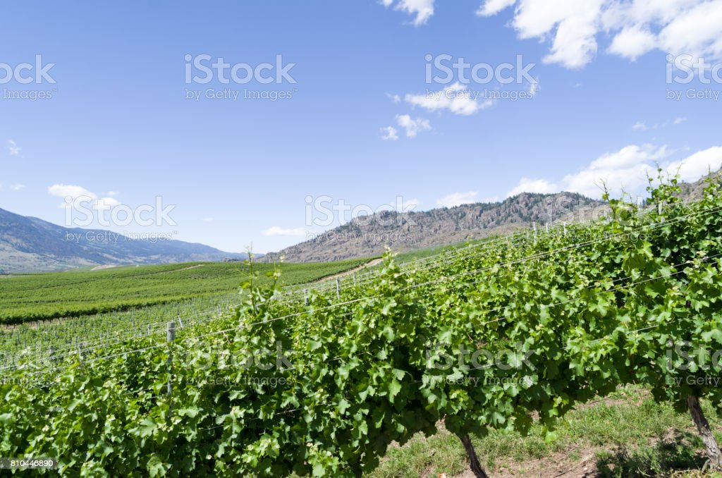 Okanagan Valley wine country stock photo