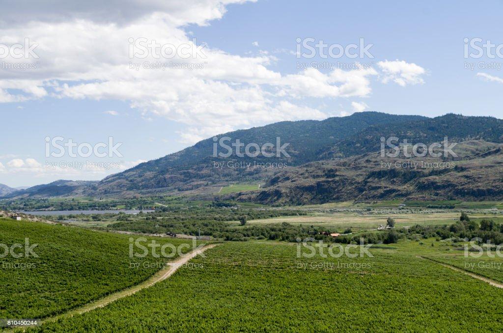 Okanagan Vally wine country stock photo