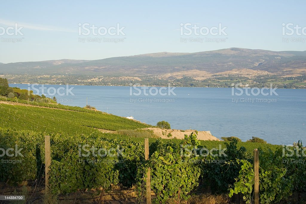 Okanagan vineyard (horizontal) royalty-free stock photo