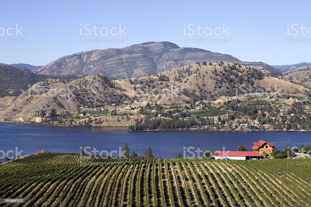 Okanagan Vineyard royalty-free stock photo
