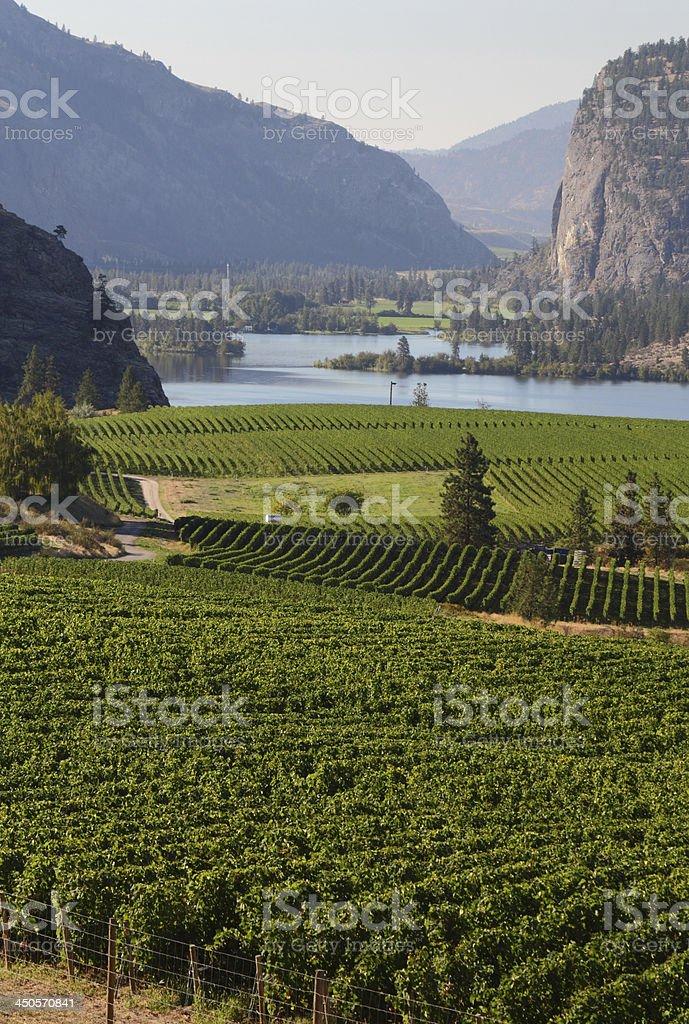 Okanagan Vineyard Scenic, British Columbia royalty-free stock photo