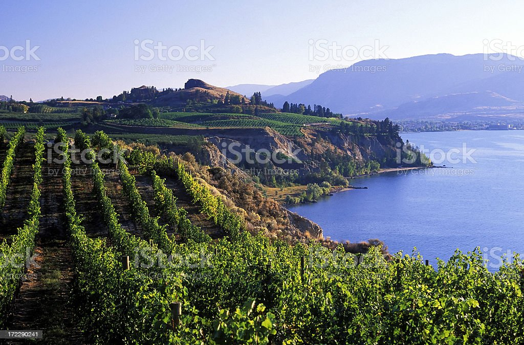 okanagan vineyards winery scenic stock photo