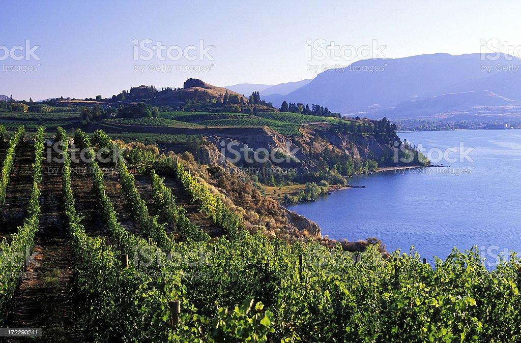 okanagan vineyards winery scenic stock photo