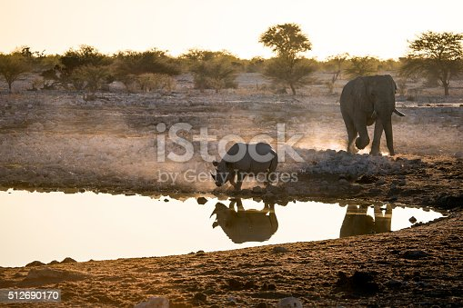 Rhino at a water hole along side and elephant