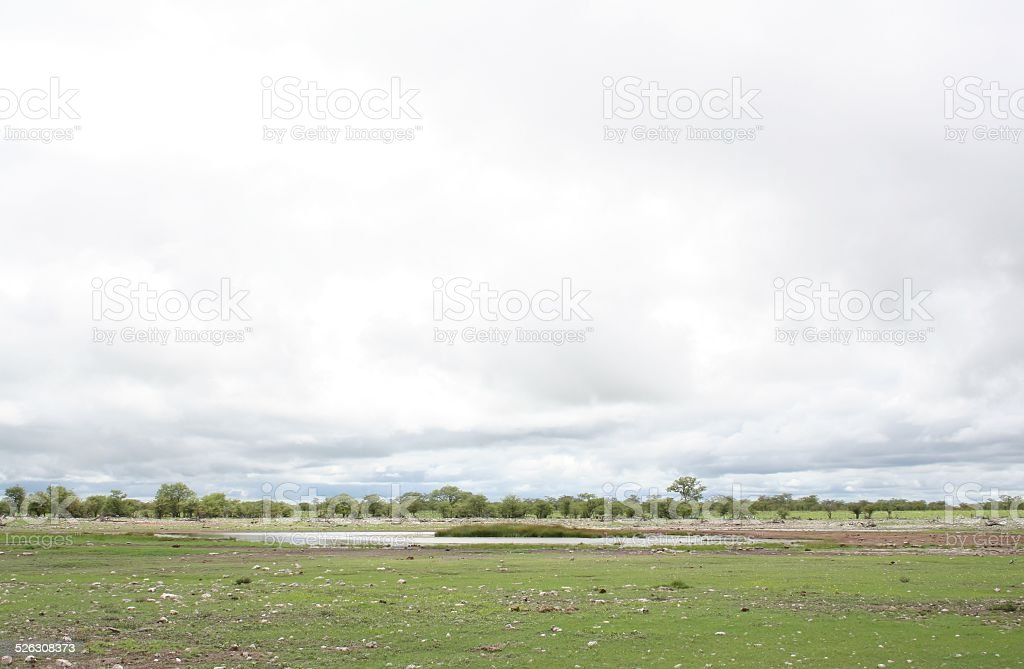 Okaukuejo Waterhole, Green Landscape, Etosha Park, Rainy Season, Namibia, Africa stock photo