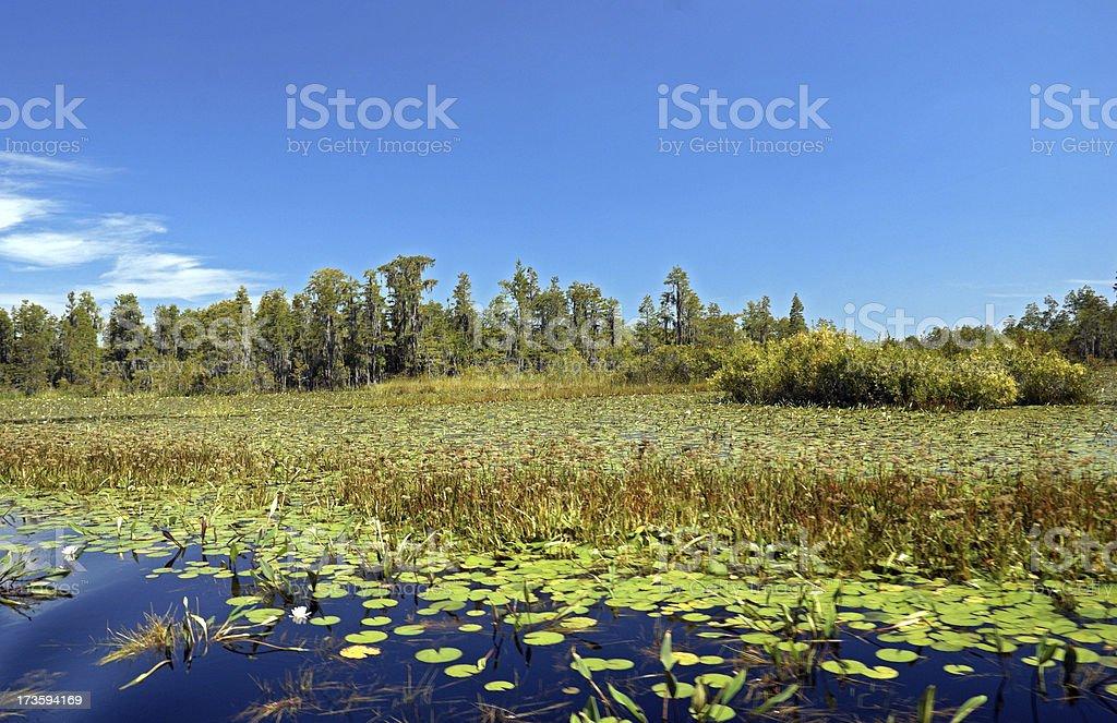 Okefenokee Swamp Lily Pad Field stock photo