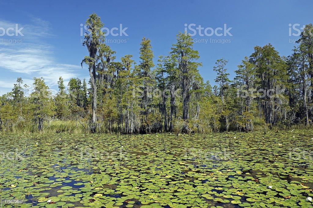 Okefenokee Swamp National Wildlife Refuge stock photo