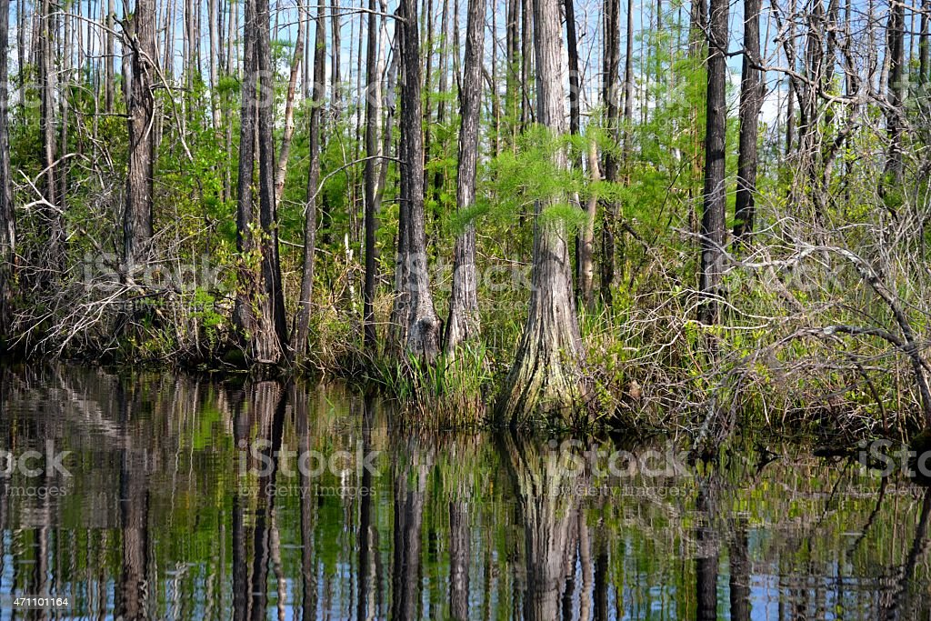 Okefenokee Swamp Nature Scene stock photo