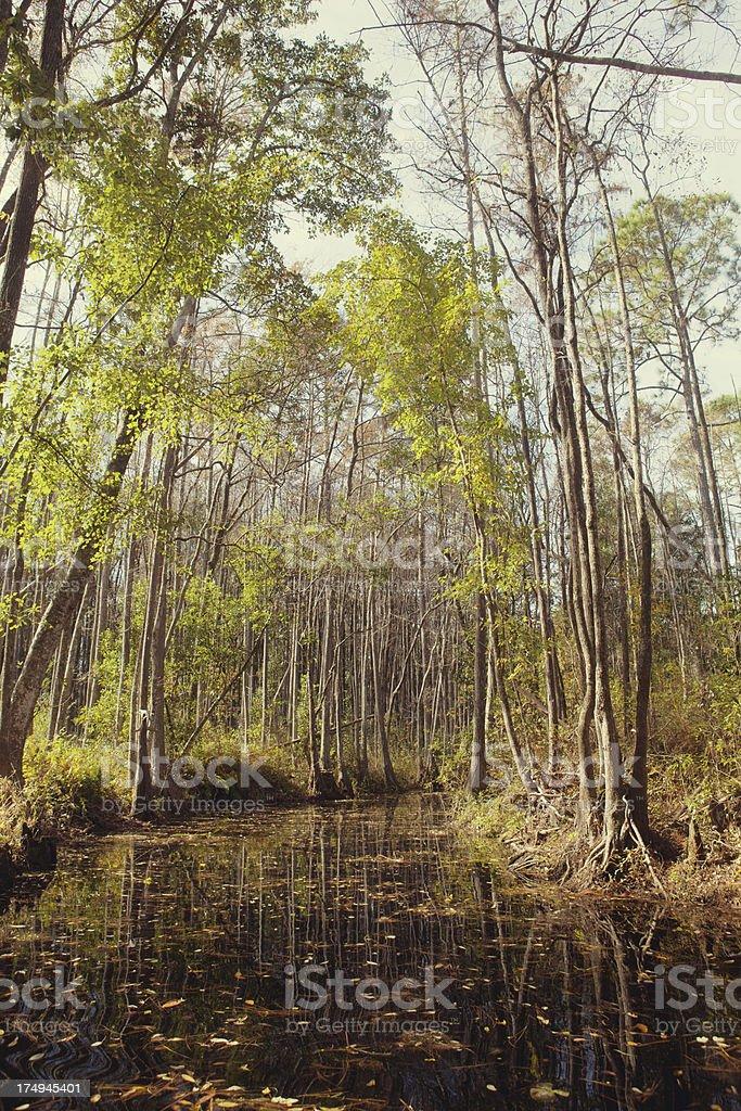 Okefenokee Swamp royalty-free stock photo