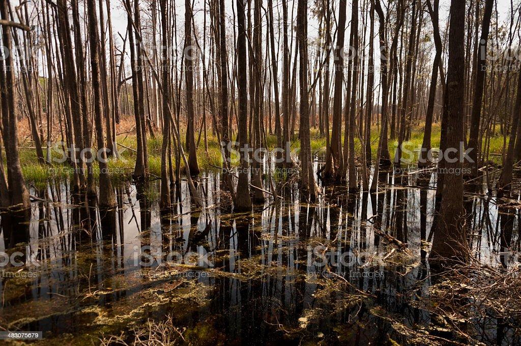Okefenokee Swamp stock photo