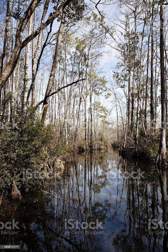 Okefenokee swamp river and trees winter stock photo