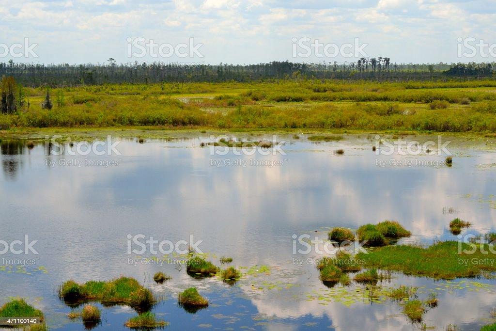 Okefenokee Swamp Scene stock photo