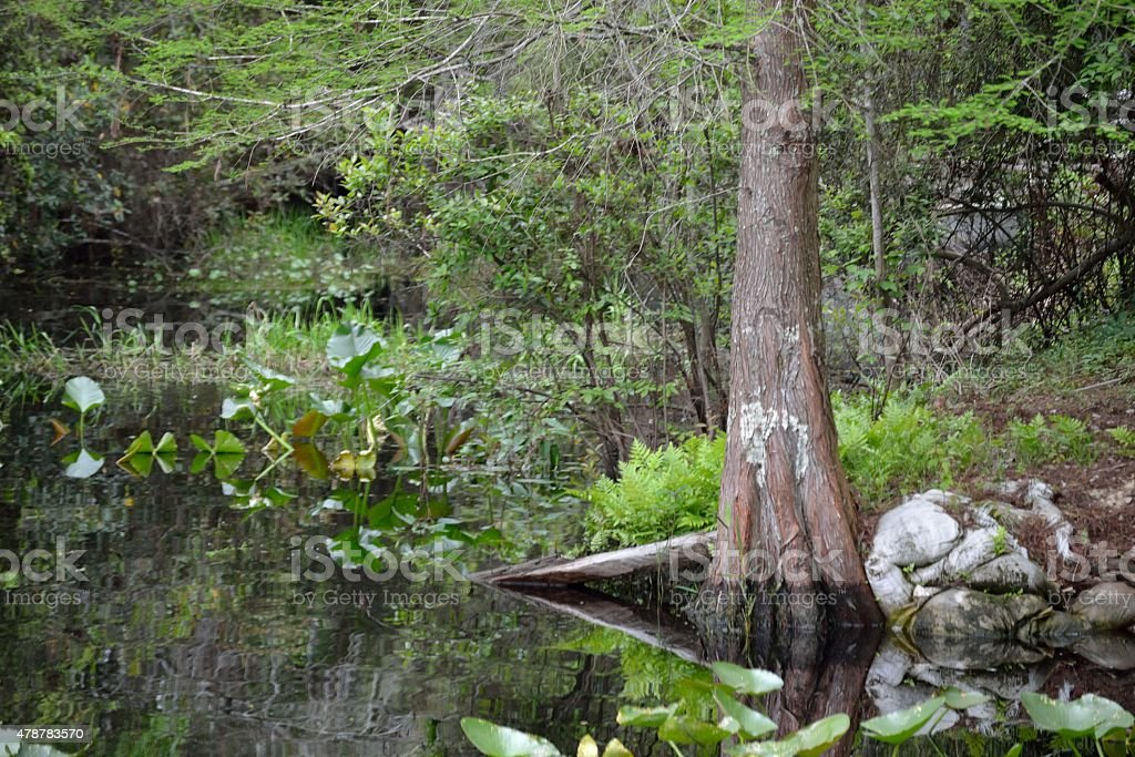 Okefenokee Swamp Scene-A1 stock photo