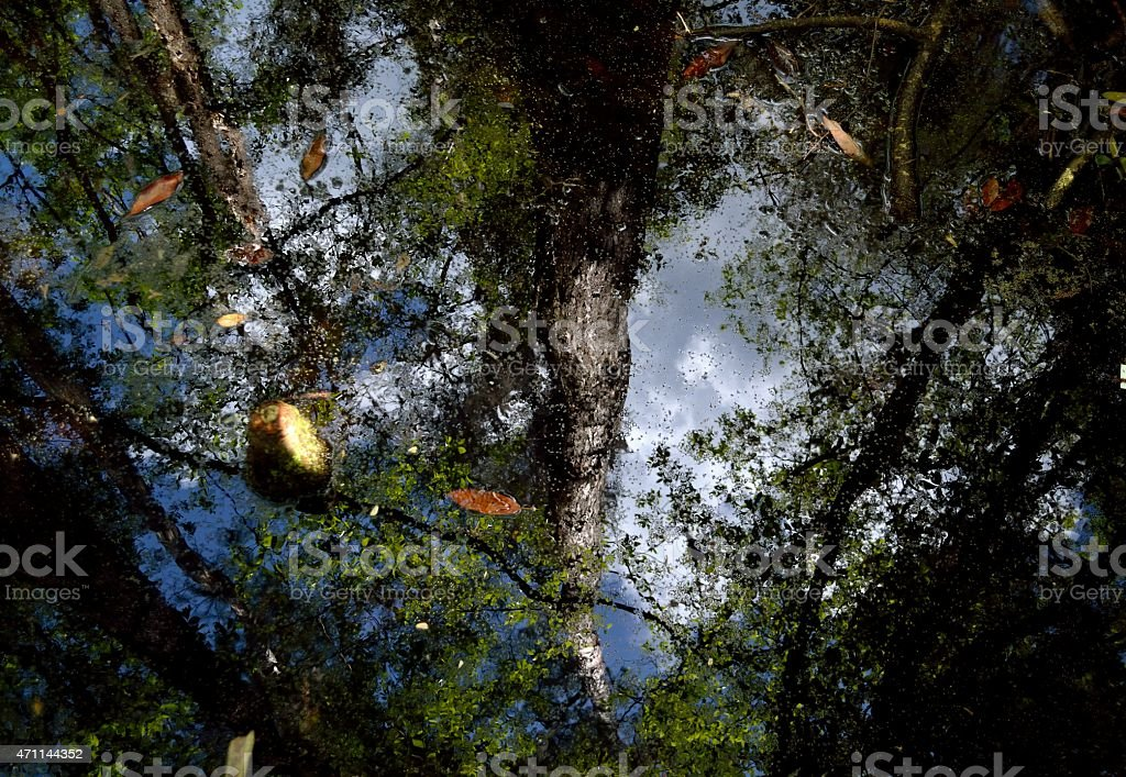 Okefenokee Water Reflections stock photo