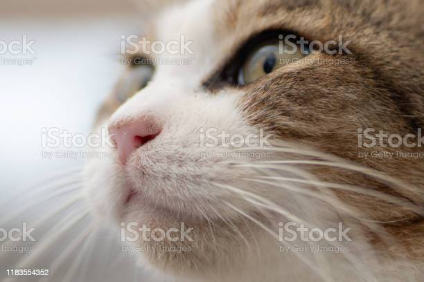 Okinawan stray cat picture id1183554352?b=1&k=6&m=1183554352&s=612x612&h=eon5m9gjy64ox6ol5leyzkexjl6rj sf3ot kt99h4g=