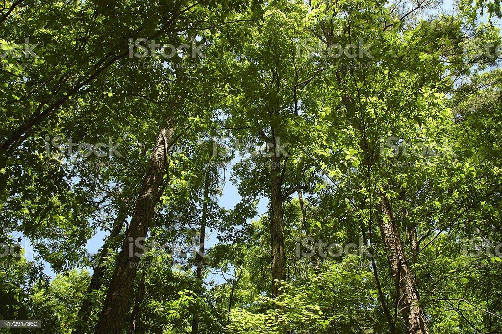 Oklahoma Forest royalty-free stock photo
