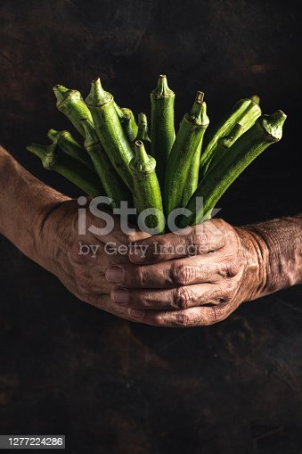 Okra African and asian vegetable bunch holding farmer man hands orl wrinkled man hands