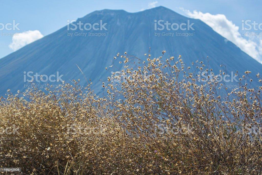 Ol Doinyo Lengai Volcano with Dry Plants stock photo