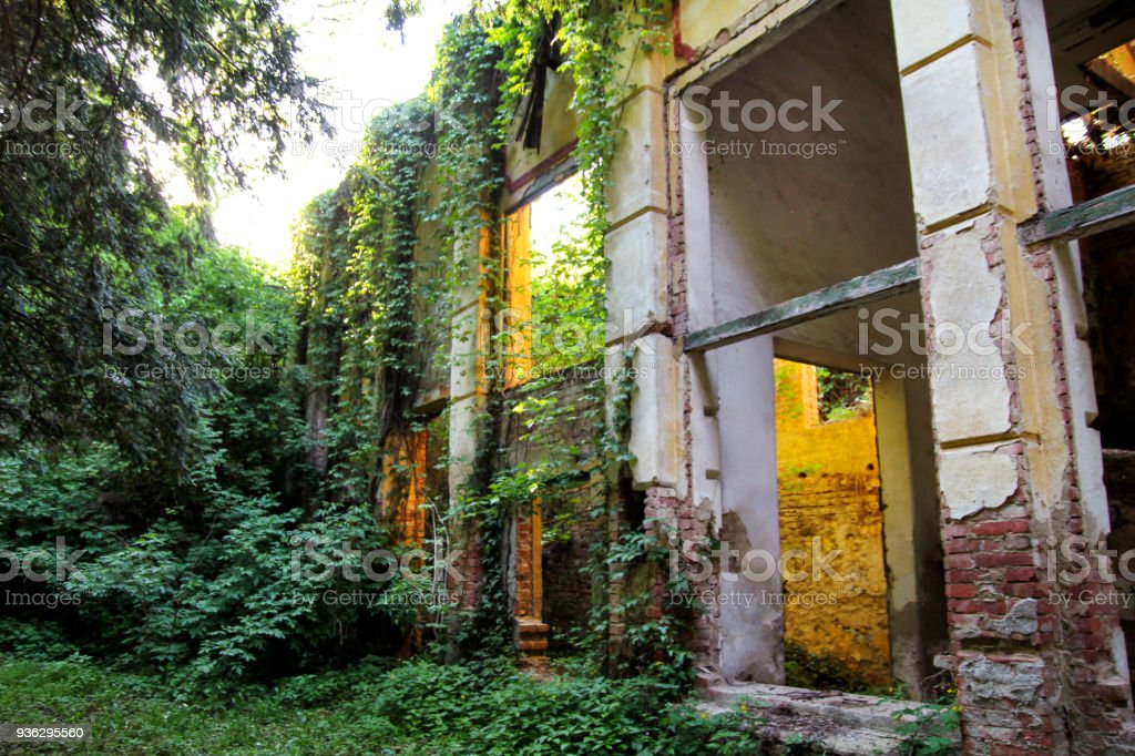 Old abandoned concrete factory structure overtaken by nature / Rusty old ruinous and abandoned building of factory, ivies are covering the walls, overtaken and destructed by nature and time. stock photo