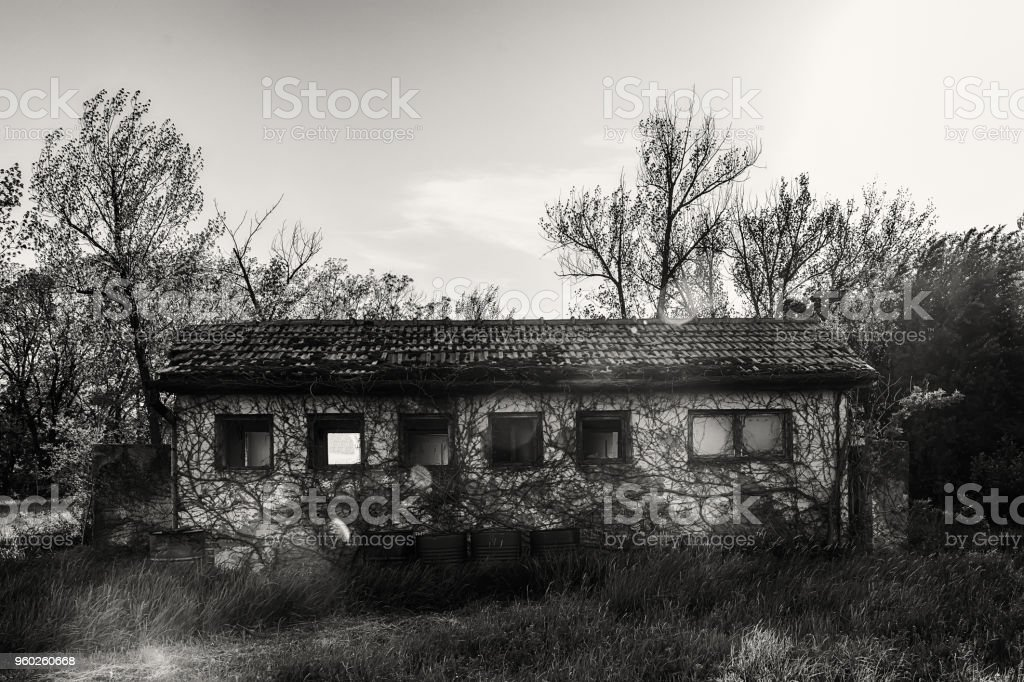 Old abandoned house in nature