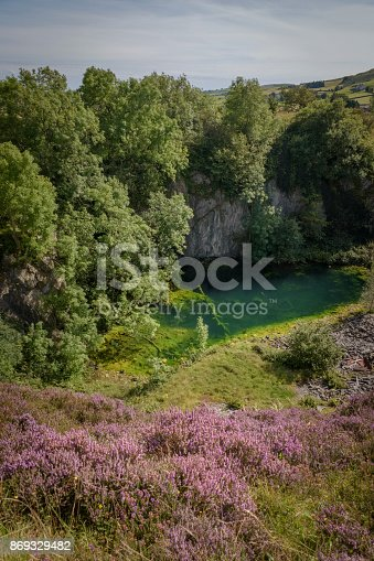 Beautiful heather and nature taking back what is hers