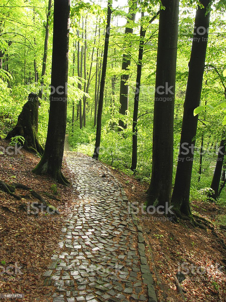 Old abandoned road. royalty-free stock photo