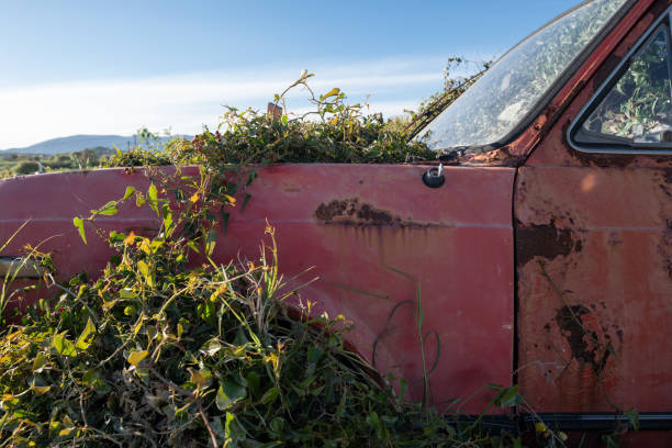 Old abandoned rusty car being reclaimed by nature stock photo