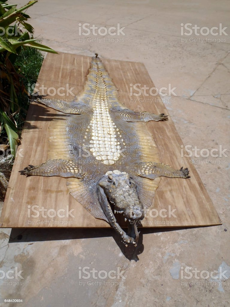 Old Alligator Skin stock photo