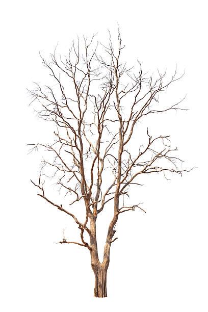 Old et arbre mort - Photo