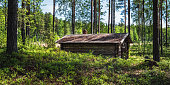 istock Old and idyllic abandoned timber cottage at summer day in Finland 973112340