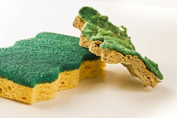 Old and new sponges stock photo